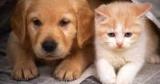 Собаки виявилися розумнішими кішок в два рази