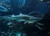 Змію, яка підлітка акулу знайшли за ДНК
