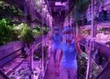 У Китаї провели експеримент з імітації життя на Місяці