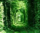 Тунель кохання в Рівному стане платним
